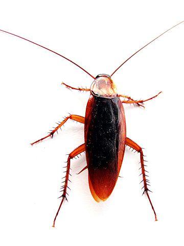Got pests? Open data project reveals housing code violation data