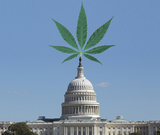 The capital of cannabis?