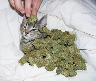 Medical marijuana is over