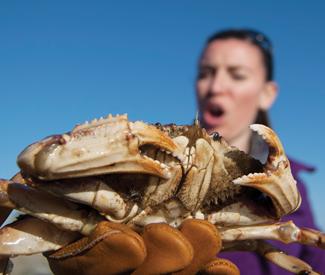 FEAST: Adventures in crabbing