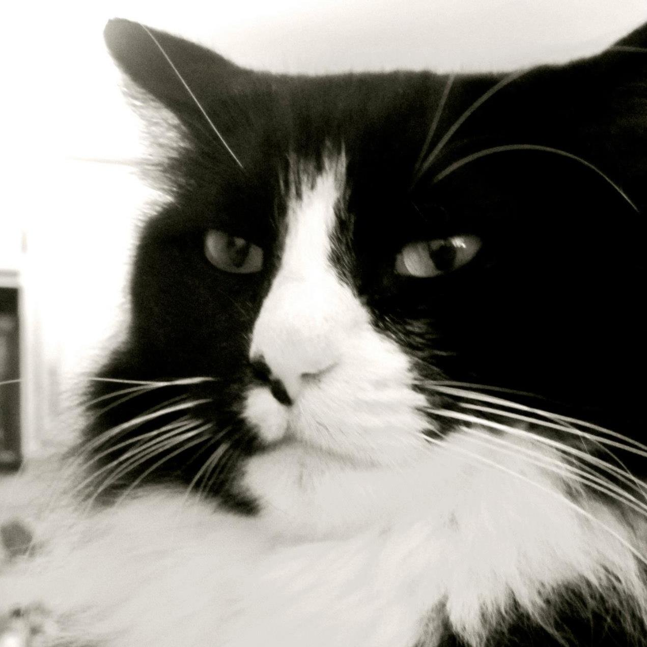 Internet cats, in their own words: Henri le Chat Noir