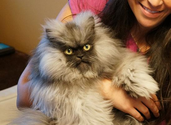 Internet cats, in their own words: Colonel Meow