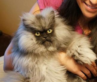 RIP Colonel Meow