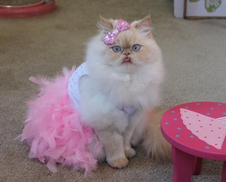 Internet cats, in their own words: Luna the Fashion Kitty