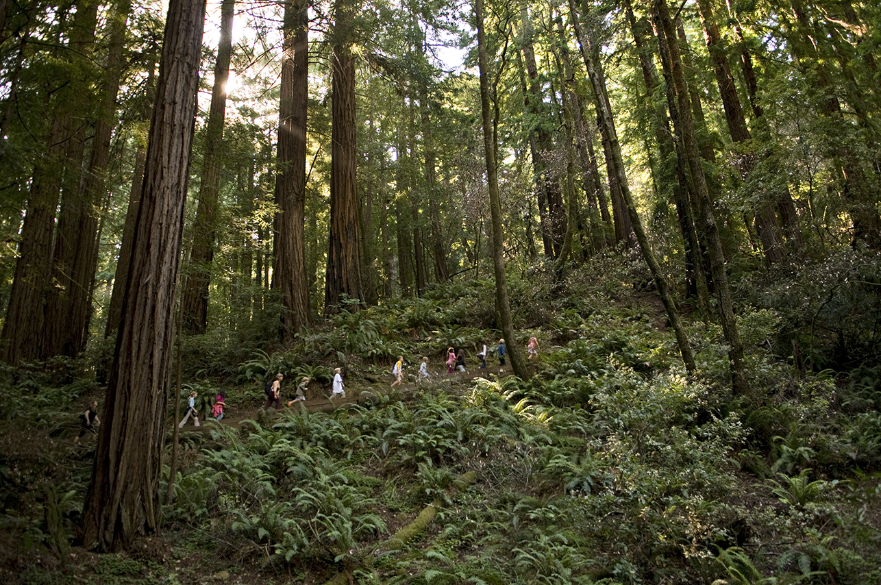 Woods for you: Best redwood parks for family times, wowwing out-of-towners, quiet reflection