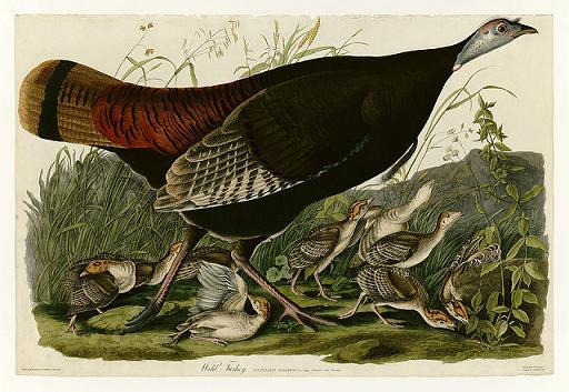 Period Piece: The saga of the California turkey